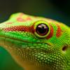 Gecko - Oliver Heldens (Martin Richard Hardstyle Remix)- Free Download