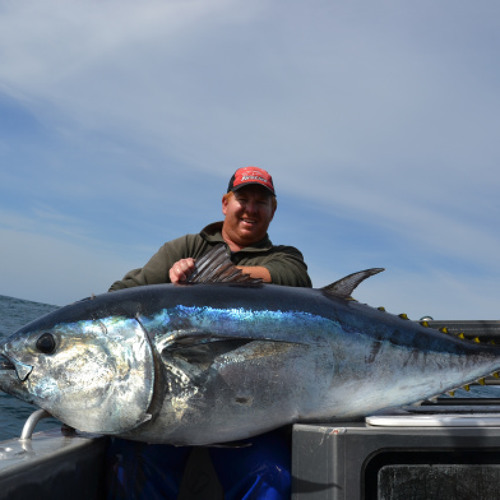Bluey, the prodigal tuna, returns after 20 years