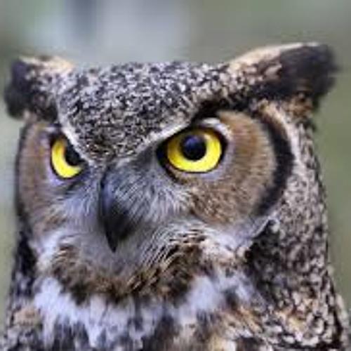Ol' Owl (instrumental)