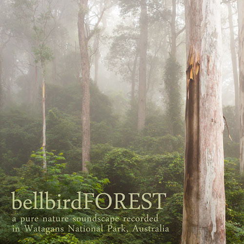 """Bellbird Forest"", Recorded in the Watagans, NSW, Australia"