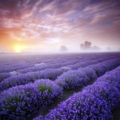 Brian Crain – Lavender Hills