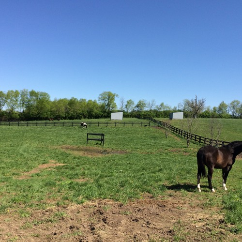 Kentucky-Based Startup Focuses on Recycling, Reducing Equine Waste