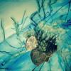 Colours (Feat. Emma Minturn)