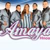 Amaya Hnos - La Ley Del Amor