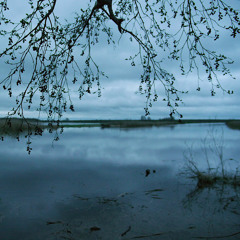 Blackbird and dawn chorus, Palupõhja May03, 2015