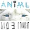 Can You Feel It Tonight (ANiML Original)
