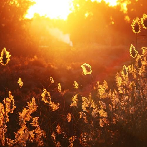 Sunrise (ft. Zeitfaktor)