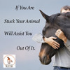 If You Are Stuck Your Animal Will Assit You Out Of It