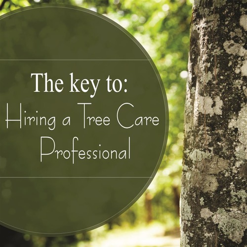 Key to Hiring a Tree Care Professional