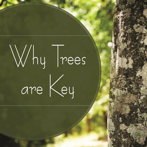 Why Trees are Key
