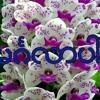 Download 03_Oasix_Feat-Shwe_Htoo_Doe_Doe_-_Bae_Thu_Ko_Chit_Lal_MAMC_.mp3 Mp3