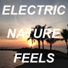Electric Nature Feels (acoustic cover of MGMT and Frank Ocean)
