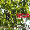 Sonidos Aves Puerto Lopez Meta Colombia