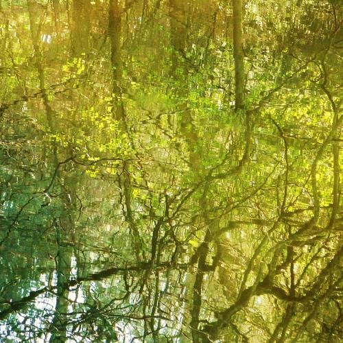 Wet Ferns