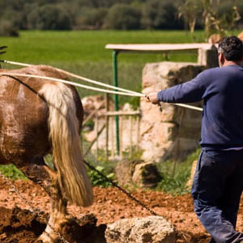 Arado de tracción animal a caballo. Paisaje sonoro en Campos. Mallorca