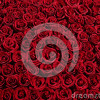 Bed of Rose