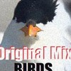 EDM | Birds | Electronic Dance Music | NEW EPIC STYLES | F r e e D o w n l o a d !
