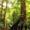 Musique De Film - The Forest Bees (Prod. by HeavenBoy)