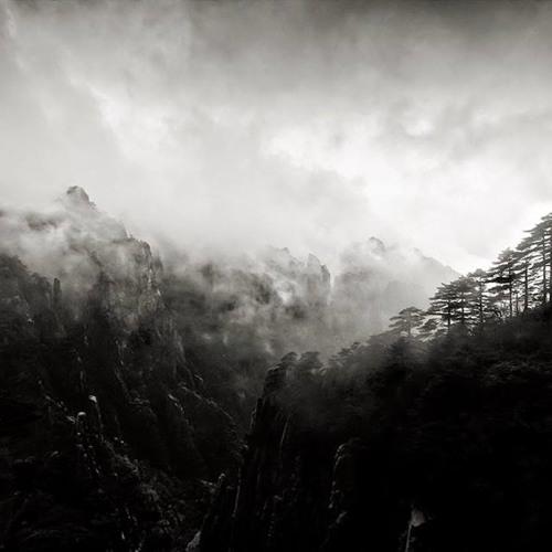 Into the Trees (Original Soundtrack for Schwarz-Weiss-Zwischenwelten)