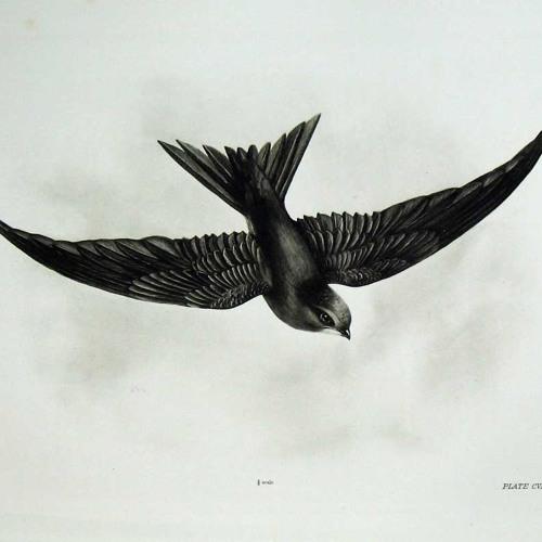 Bibio + Ex Confusion - Swift