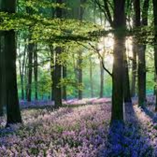 Gathering The Flowers, Flowers from the Forest ~ By Devananda