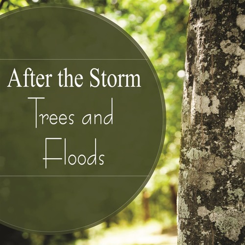 After the Storm: Trees and Floods