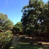 Garden Sounds, Malawi