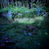 Phuket Dawn