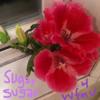 Sugar Sugar (Archies cover for WFMU)