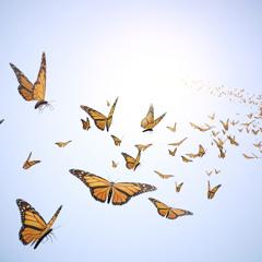 Seitkaliyev - Waltz of The Butterfly