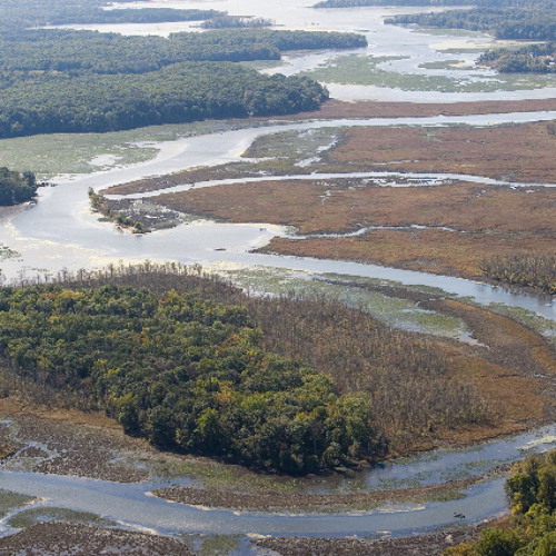 A New Rule From The EPA Could Mean Increased Protection For Wetland Areas