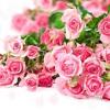 ĐYO Số 26 - Tình yêu có lúc như một bó hoa đầy gai