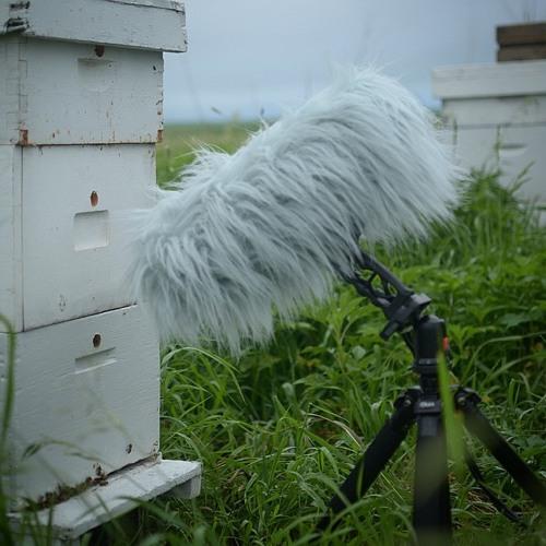 Beehives at The Prairie Flower