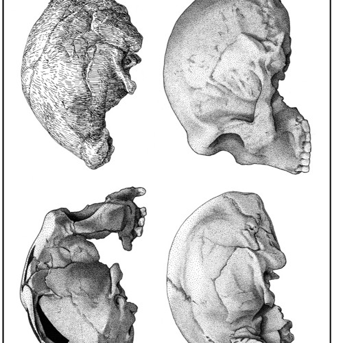 The Peculiarity of Homo Sapiens