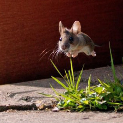 The Adventures Of Maxwell The Mouse - performed by members of WESO