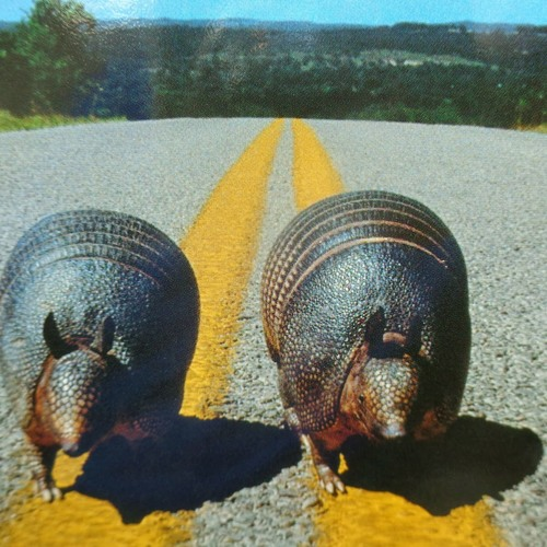 Armadillos Come in Pairs