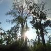 Sa Bukid