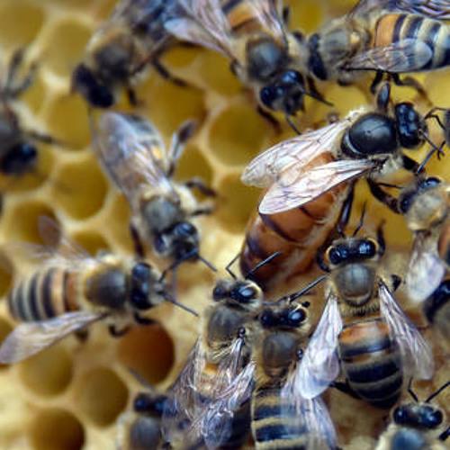 Babbage: Quantum leaps and bee-conomics