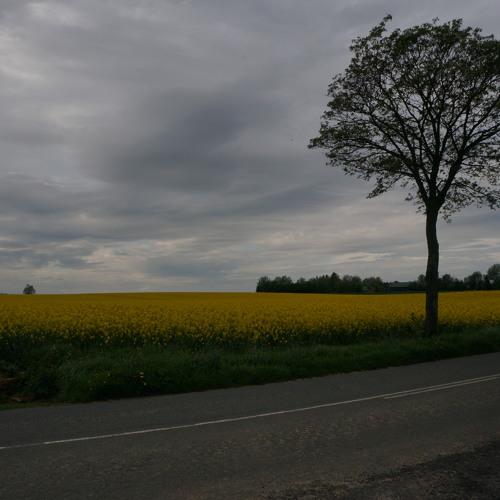 Landscape: Colza