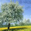 No Kingz Ft. Edy Rose & SMNR (Prod. by Hype®)