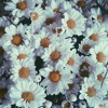 Let it Die - Three Days Grace (chorus cover)