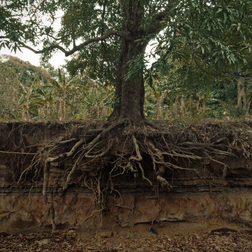 How to Rescue Trees with Wrapped Up Roots