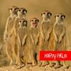 01 HAPPY PILLS HAPPY PILLS (Norah Jones Cover)