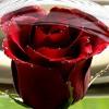Sara Bareilles- Love Song Cover 7.5.15