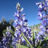 Bloom Blast:  More Early Season Flowers