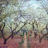 Soul Orchard feat. Zen