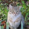 Petit Chat sur le Toit