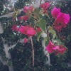 flowers ep (out now on bandcamp)