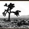 U2 - I Still Haven't Found (Joshua Tree Tour Tone)