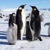 """The Penguin Sing """"Happy Birthday"""""""